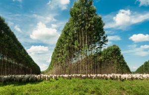 Muito além do ESG - a sustentabilidade como propósito